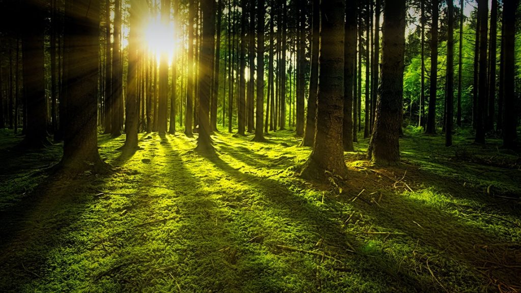 hygge forest walks